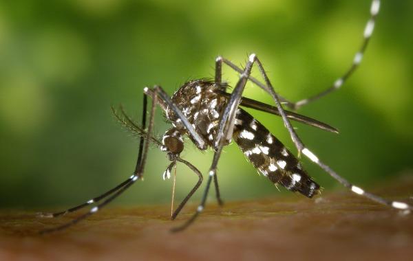 Techno Bam a développé la borne Qista, un piège à moustique intelligent